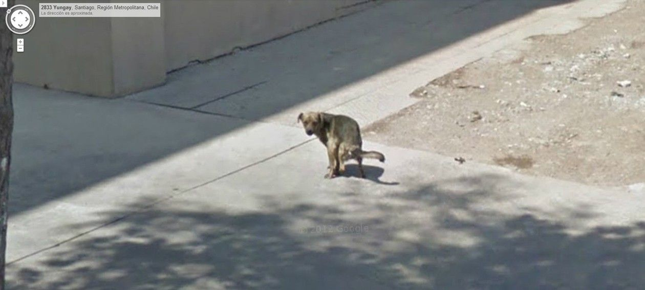 google-street-view-chile-bad-dog