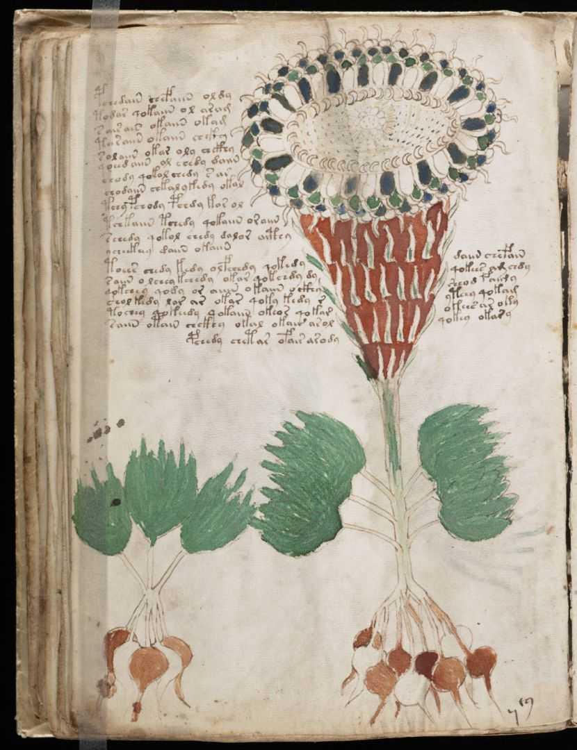 Vojnicev manuskript (13)