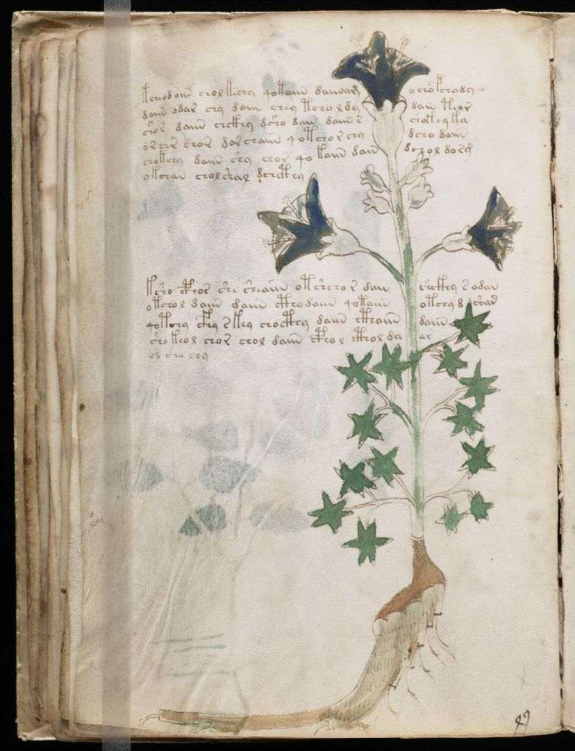 Vojnicev manuskript (16)