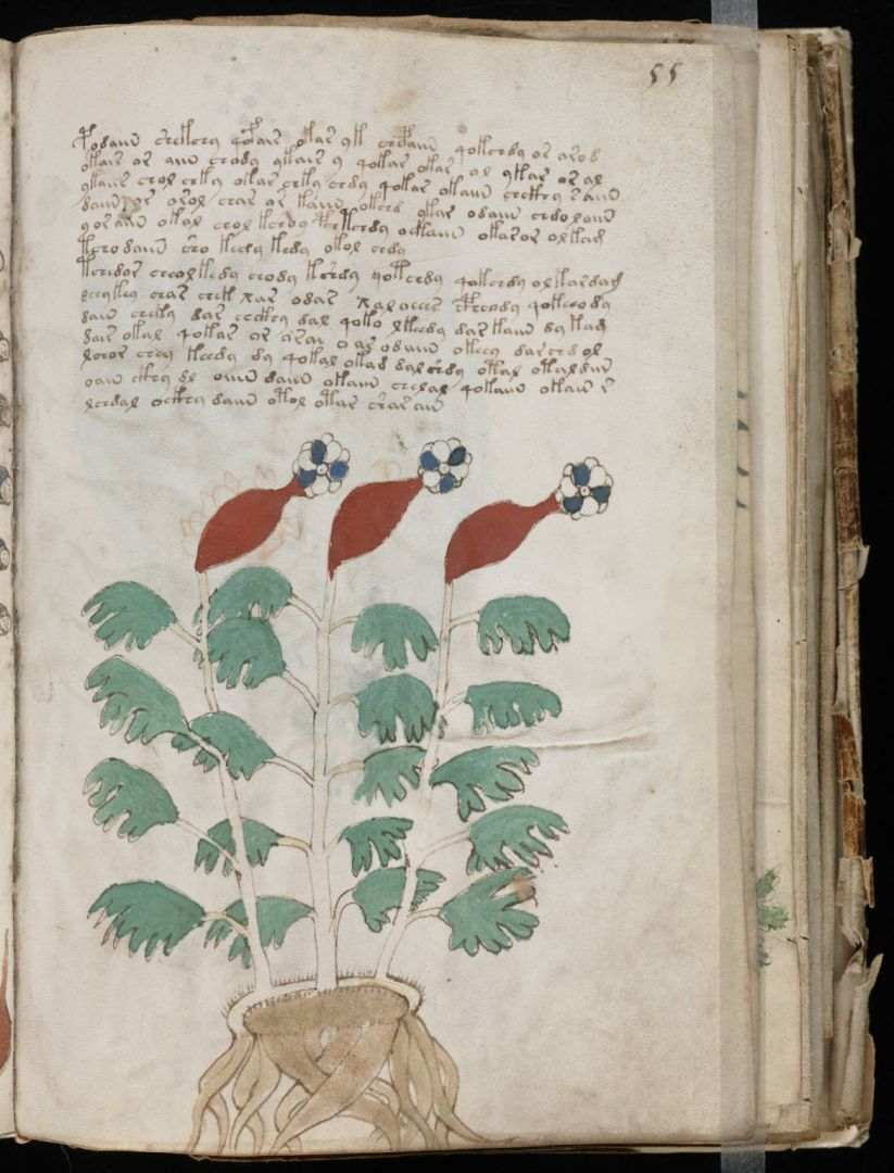 Vojnicev manuskript (14)